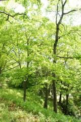 公園・樹木17