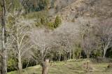 吉野・中千本の桜