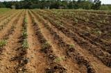 植物を植えた畑 風景3