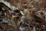 冬のシーン・枯葉