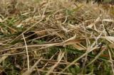 冬の地面・枯葉