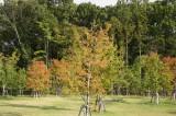公園の木3