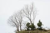 山の樹木(トレース向き)