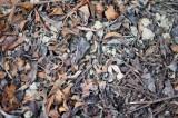 冬の地面・枯葉2