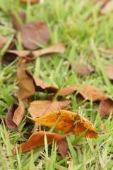 芝生と落葉1