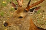 奈良の鹿・側面12