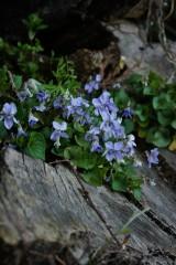 切り株と花