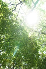 公園・空・木漏れ日1