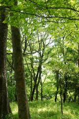 公園・樹木18