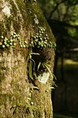 苔などが生えた樹皮