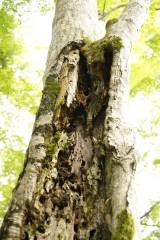 傷んだ樹木1