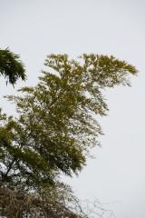 竹(トレース向き)