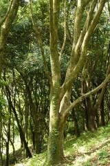 公園・樹木3