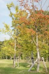 公園 木1