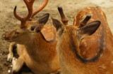 奈良の鹿・振り返りと側面