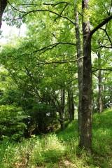 公園・樹木13