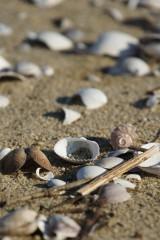 海岸に打ち上げられた貝殻6