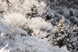 雪景色 積雪した樹木2