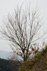 樹木(トレース向き)