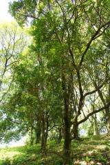 公園・樹木6
