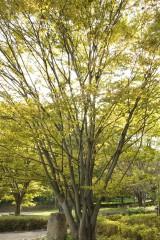 公園 木2