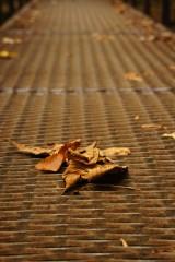 橋の上の落ち葉