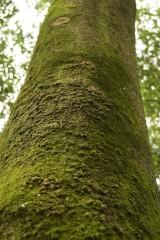 苔 生えた樹木