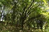 公園・樹木1