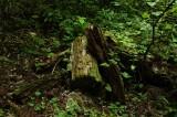 森に放置された木片