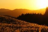 夕焼けと高原に広がるススキ1
