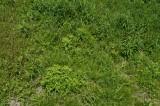 草の生えた畑