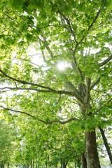 公園の樹木・木漏れ日
