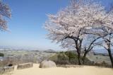 明日香村・甘樫丘展望台 桜