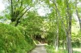 公園の散歩道1