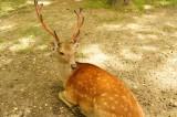 奈良の鹿・振り返り2