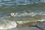 サッカーボールが漂着した海岸1