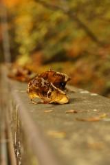 橋の手すりに載った落ち葉
