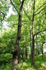 公園・樹木12