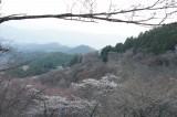 吉野・上千本 桜