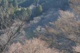 吉野・上千本から見た桜