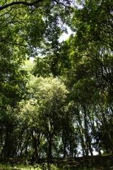 公園・樹木2