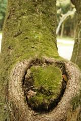 樹木・新葉