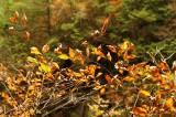 秋 紅葉づいた葉2
