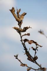 枯葉・枯れ枝3