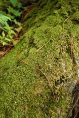 苔の生えた樹皮