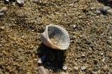 海岸に打ち上げられた貝殻4
