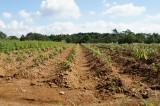 植物を植えた畑の風景1