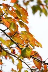 紅葉・桜1