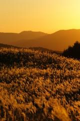 夕焼けと高原に広がるススキ2