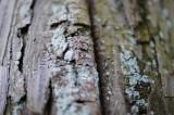 苔 生えた木肌